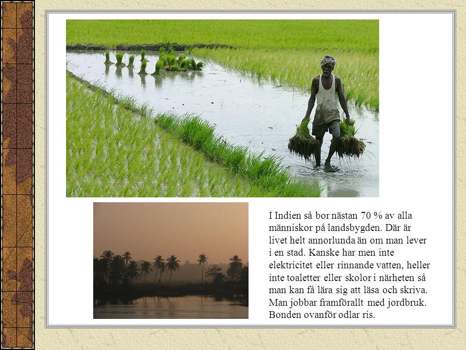 I Indien så bor nästan 70 % av alla människor på landsbygden