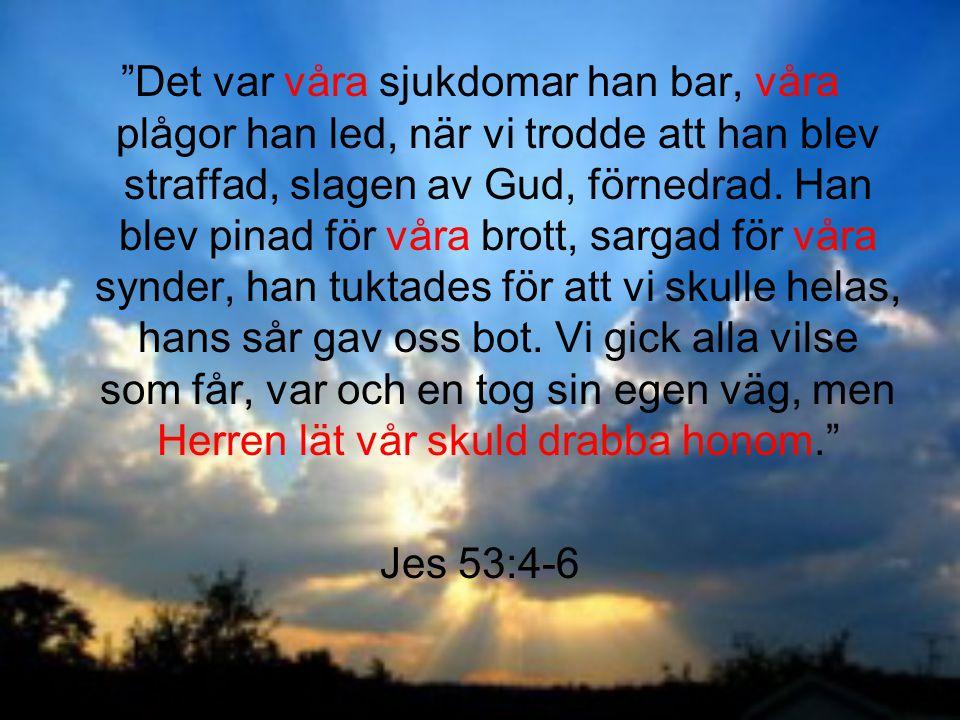 Det var våra sjukdomar han bar, våra plågor han led, när vi trodde att han blev straffad, slagen av Gud, förnedrad. Han blev pinad för våra brott, sargad för våra synder, han tuktades för att vi skulle helas, hans sår gav oss bot. Vi gick alla vilse som får, var och en tog sin egen väg, men Herren lät vår skuld drabba honom.
