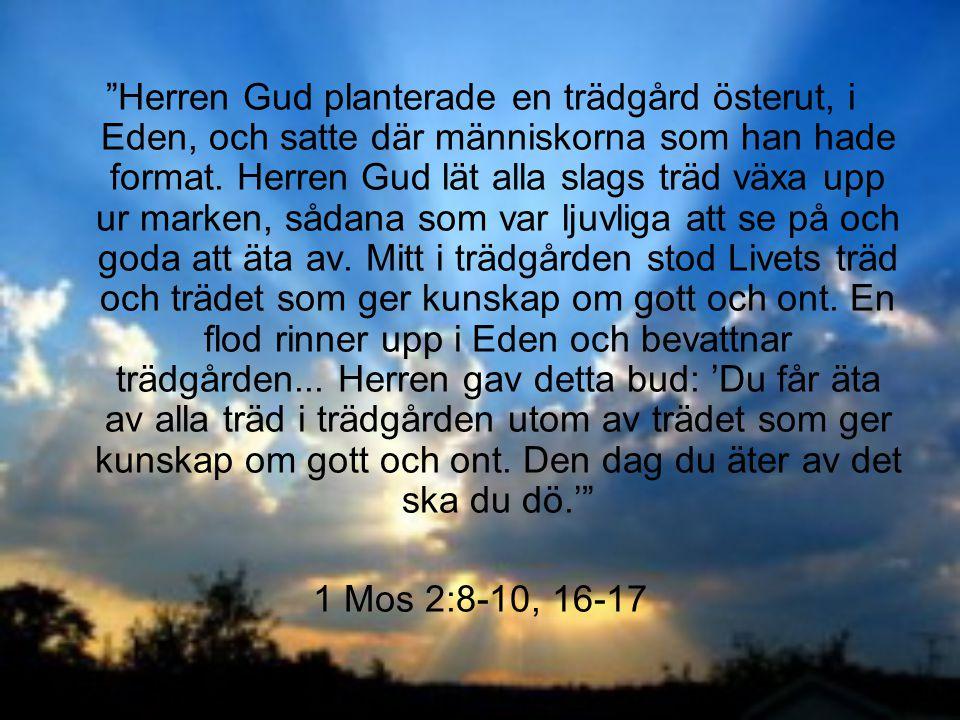 Herren Gud planterade en trädgård österut, i Eden, och satte där människorna som han hade format. Herren Gud lät alla slags träd växa upp ur marken, sådana som var ljuvliga att se på och goda att äta av. Mitt i trädgården stod Livets träd och trädet som ger kunskap om gott och ont. En flod rinner upp i Eden och bevattnar trädgården... Herren gav detta bud: 'Du får äta av alla träd i trädgården utom av trädet som ger kunskap om gott och ont. Den dag du äter av det ska du dö.'