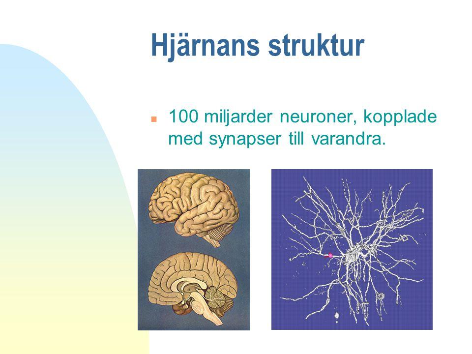 Hjärnans struktur 100 miljarder neuroner, kopplade med synapser till varandra.