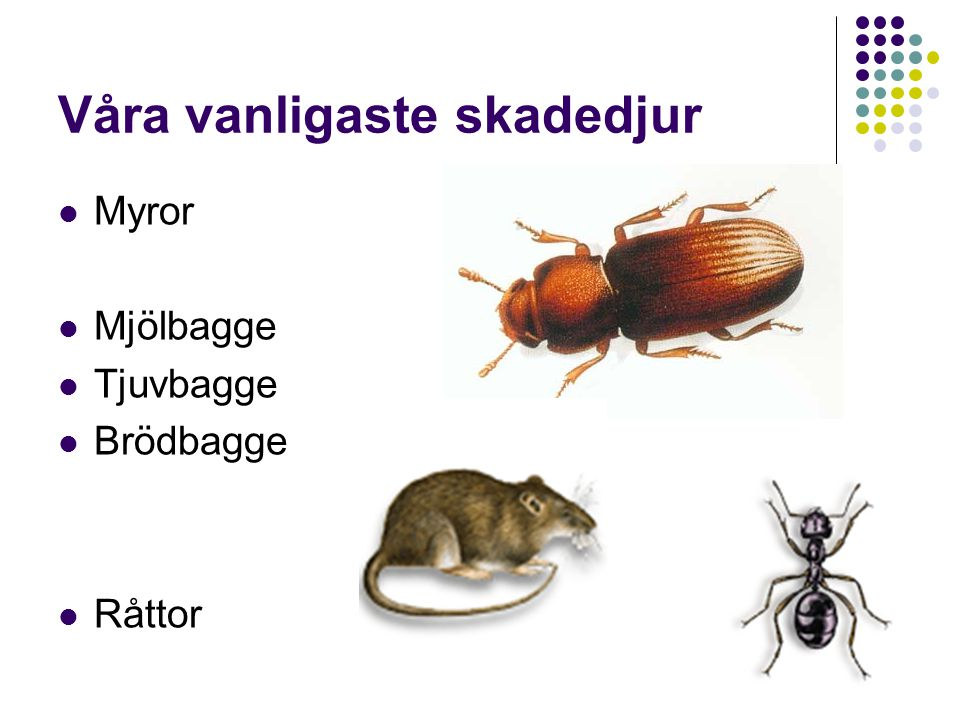 Våra vanligaste skadedjur