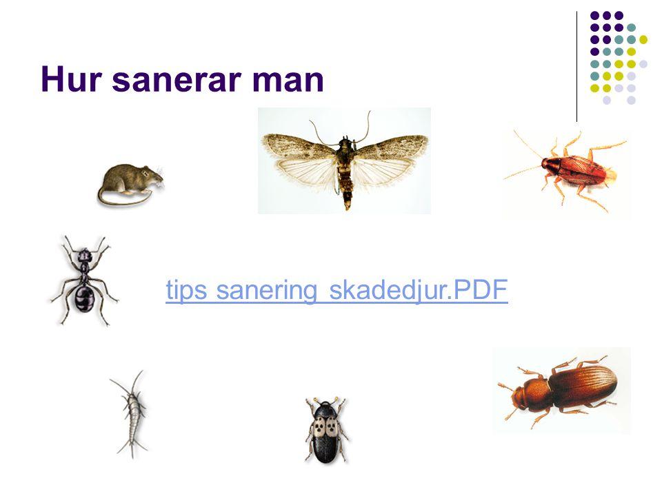Hur sanerar man tips sanering skadedjur.PDF