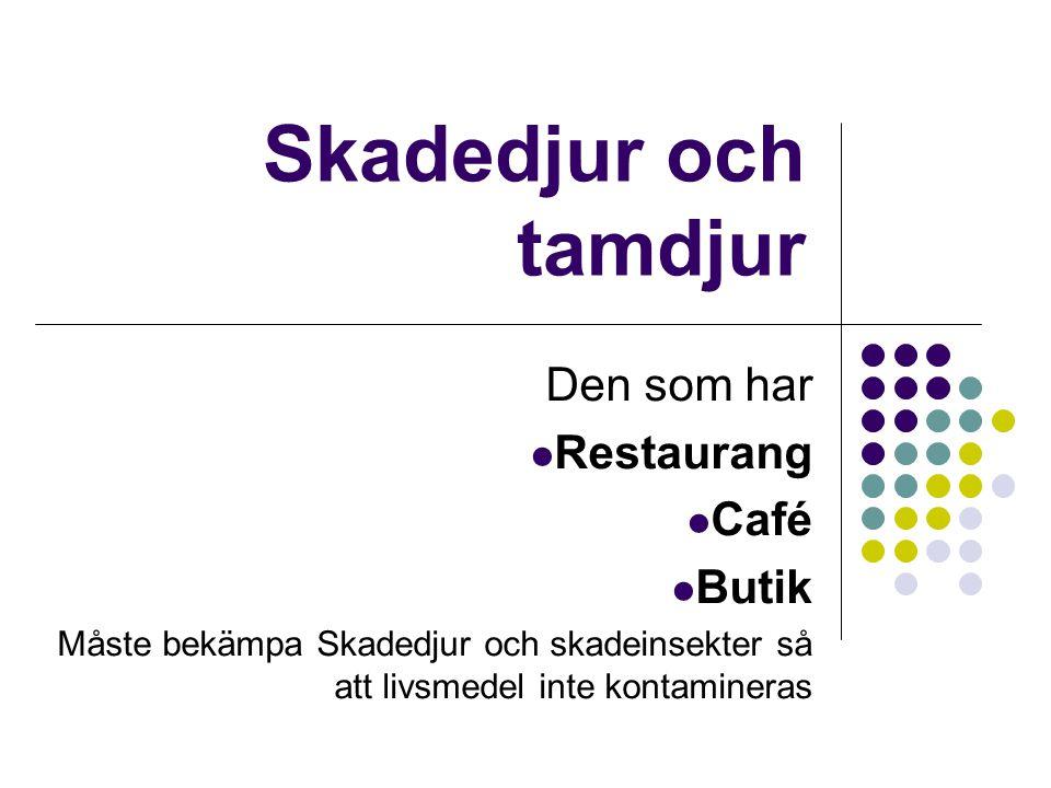 Skadedjur och tamdjur Den som har Restaurang Café Butik