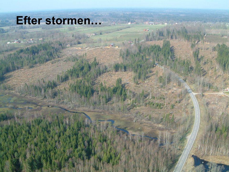 Efter stormen… 2005-09-14