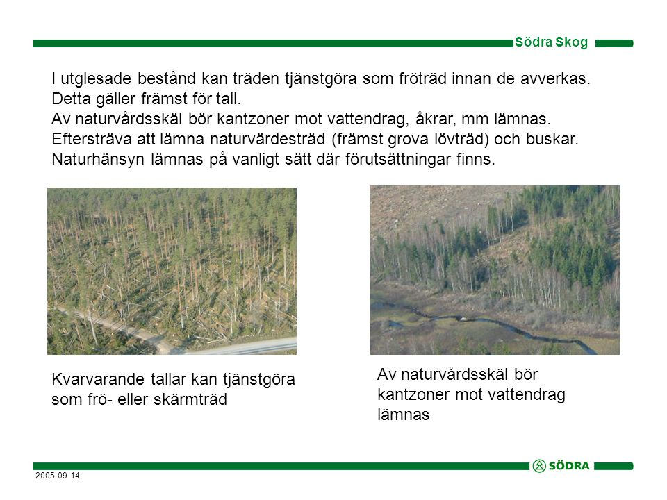 Av naturvårdsskäl bör kantzoner mot vattendrag lämnas