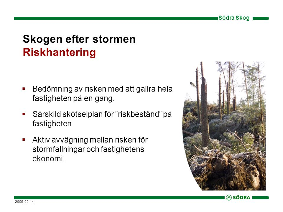 Skogen efter stormen Riskhantering