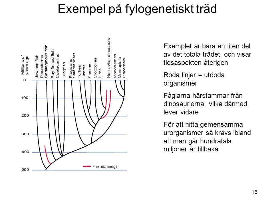 Exempel på fylogenetiskt träd