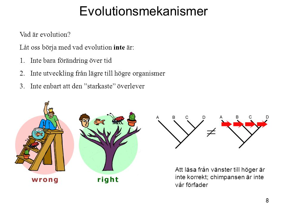 Evolutionsmekanismer