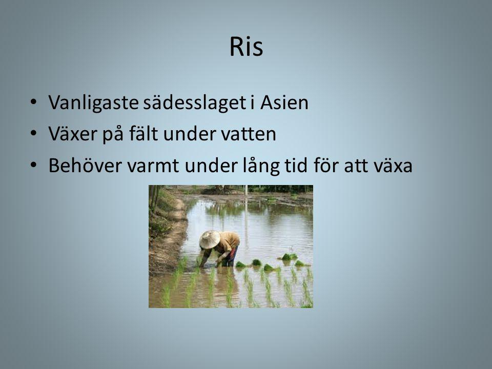 Ris Vanligaste sädesslaget i Asien Växer på fält under vatten