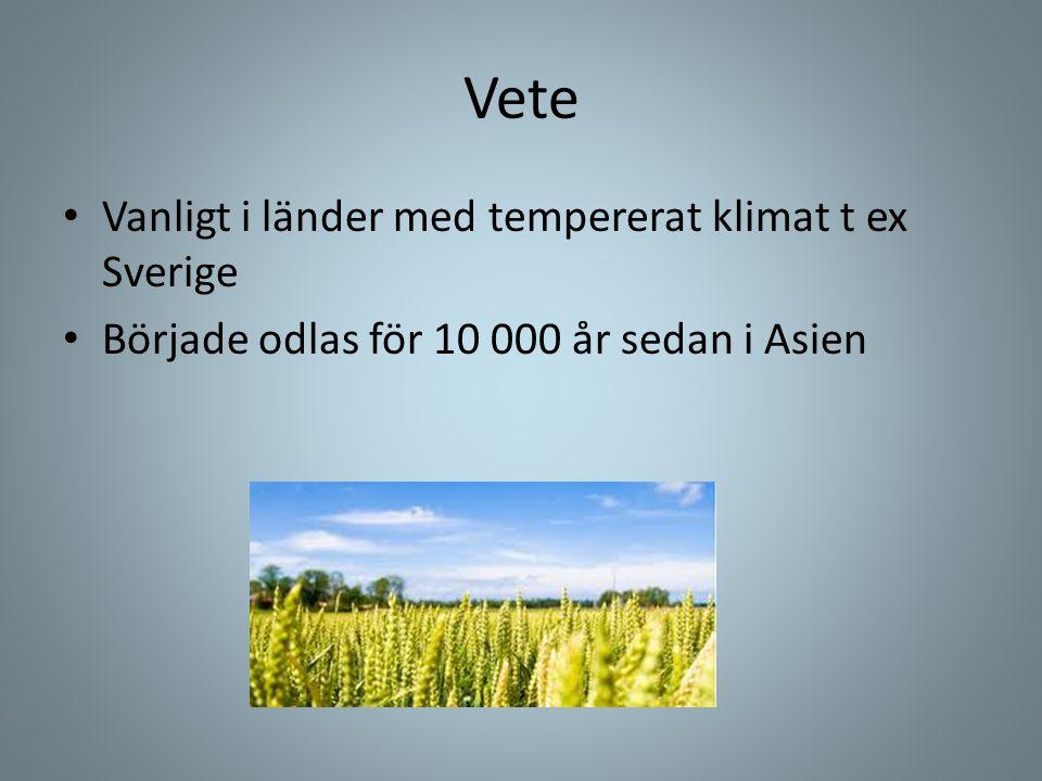 Vete Vanligt i länder med tempererat klimat t ex Sverige
