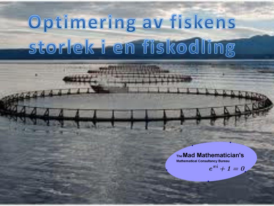 Optimering av fiskens storlek i en fiskodling