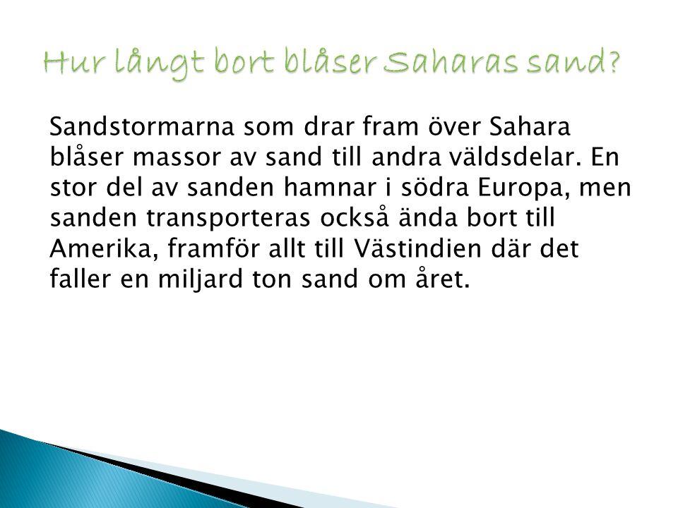 Hur långt bort blåser Saharas sand