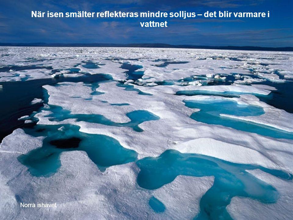 När isen smälter reflekteras mindre solljus – det blir varmare i vattnet