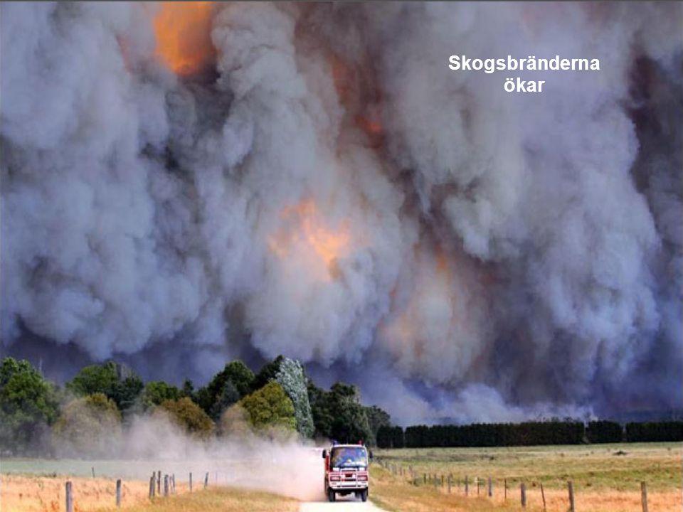 Skogsbränderna ökar