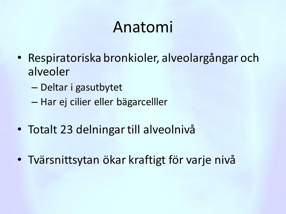 Anatomi Respiratoriska bronkioler, alveolargångar och alveoler