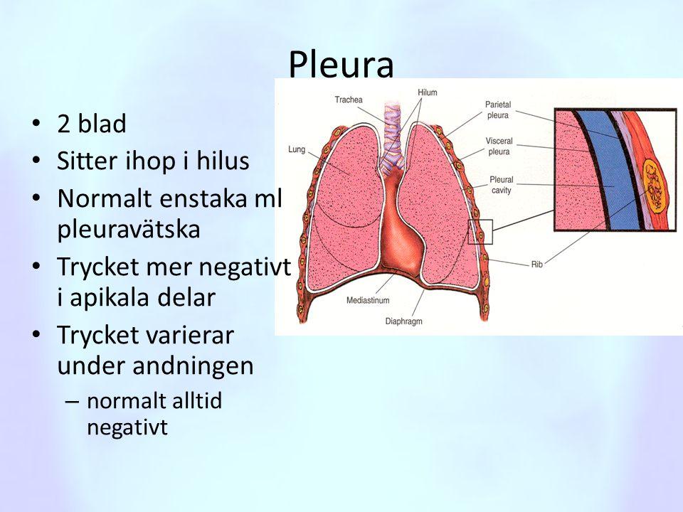 Pleura 2 blad Sitter ihop i hilus Normalt enstaka ml pleuravätska