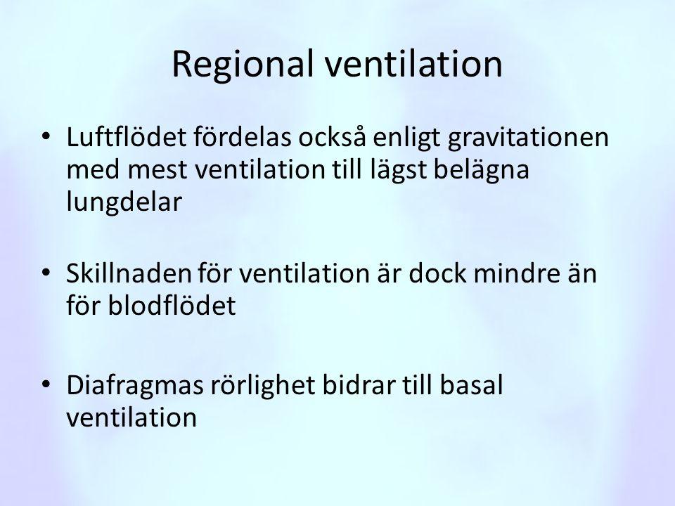 Regional ventilation Luftflödet fördelas också enligt gravitationen med mest ventilation till lägst belägna lungdelar.