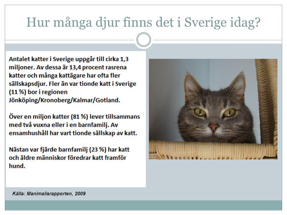 Hur många djur finns det i Sverige idag