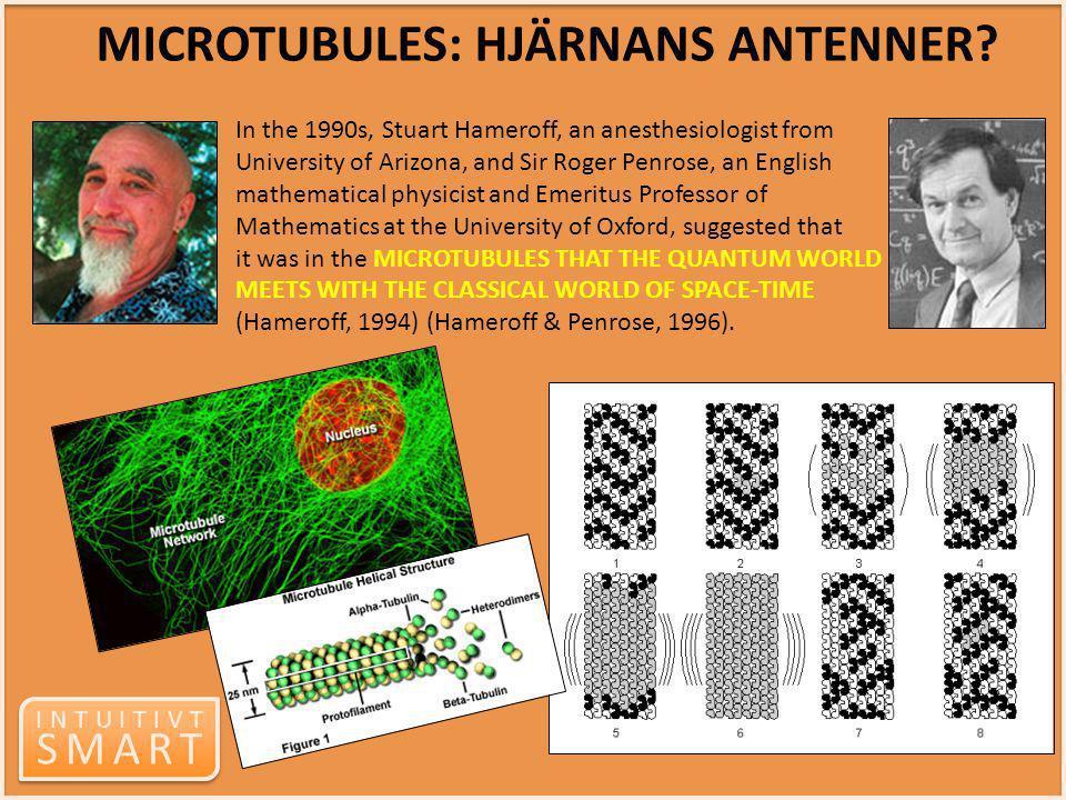 MICROTUBULES: HJÄRNANS ANTENNER