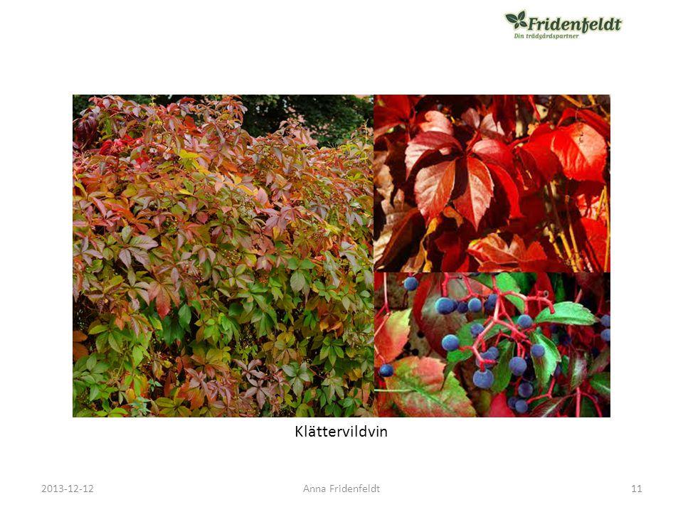 Klättervildvin 2013-12-12 Anna Fridenfeldt