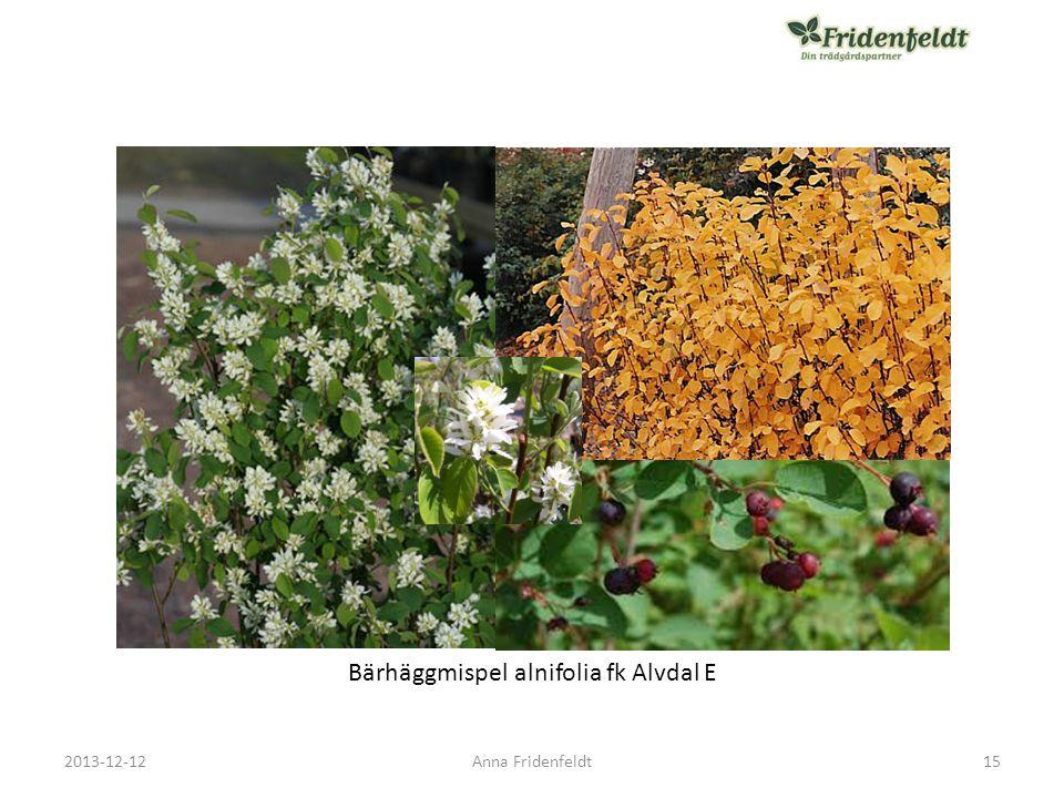 Bärhäggmispel alnifolia fk Alvdal E