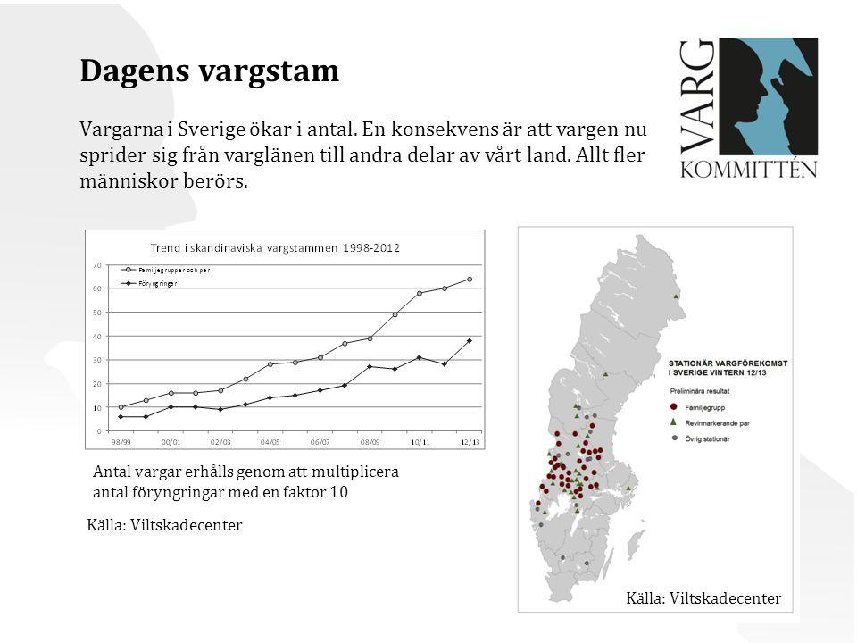Dagens vargstam Vargarna i Sverige ökar i antal. En konsekvens är att vargen nu. sprider sig från varglänen till andra delar av vårt land. Allt fler.