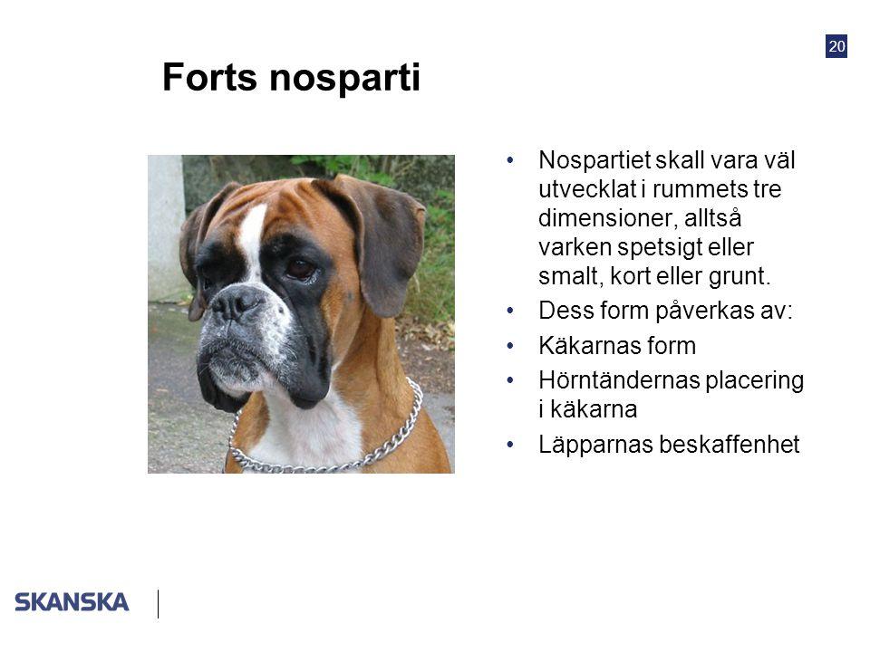 Forts nosparti Nospartiet skall vara väl utvecklat i rummets tre dimensioner, alltså varken spetsigt eller smalt, kort eller grunt.