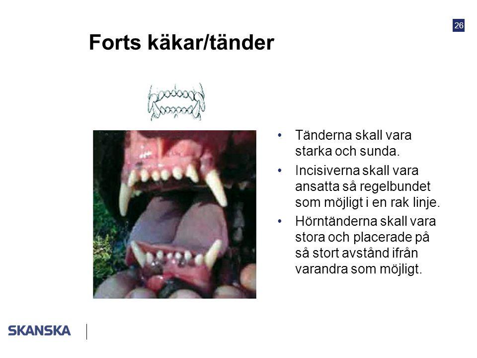 Forts käkar/tänder Tänderna skall vara starka och sunda.