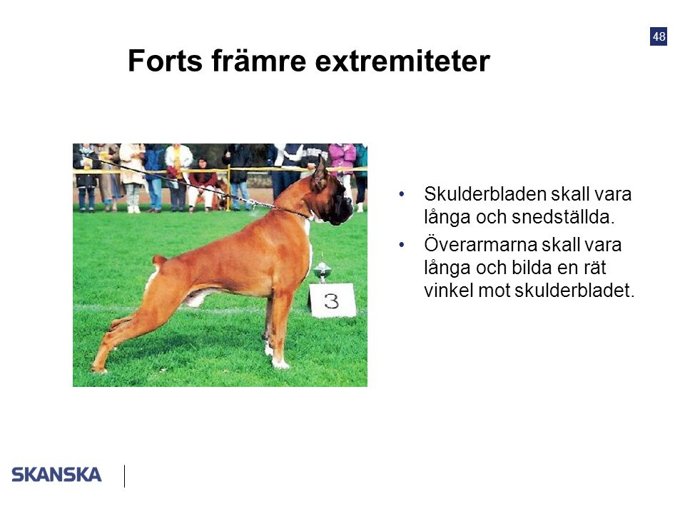 Forts främre extremiteter