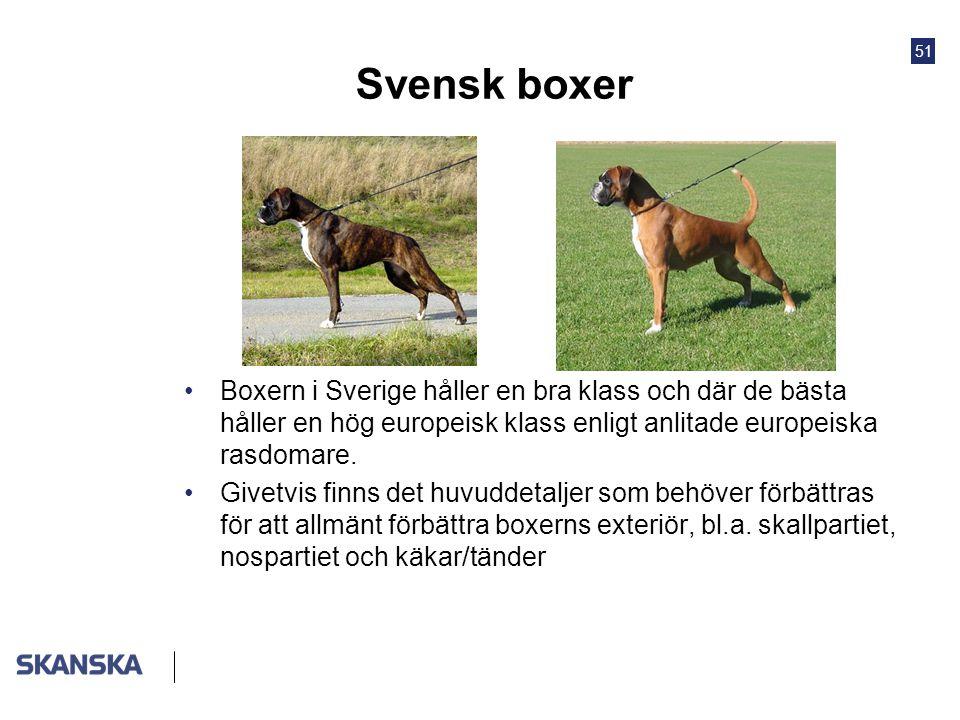 Svensk boxer Boxern i Sverige håller en bra klass och där de bästa håller en hög europeisk klass enligt anlitade europeiska rasdomare.