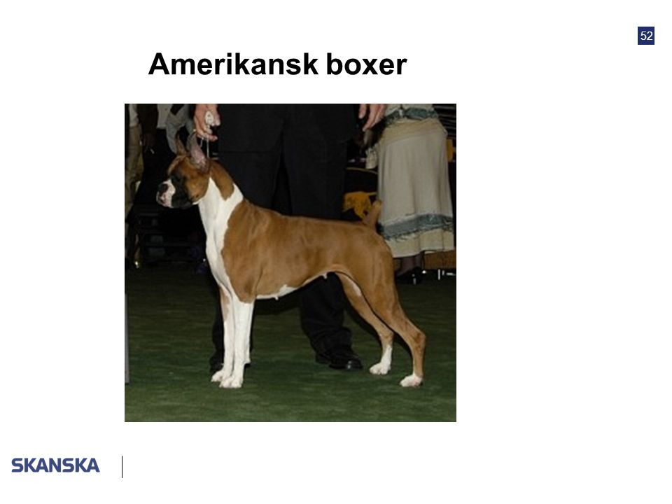 Amerikansk boxer