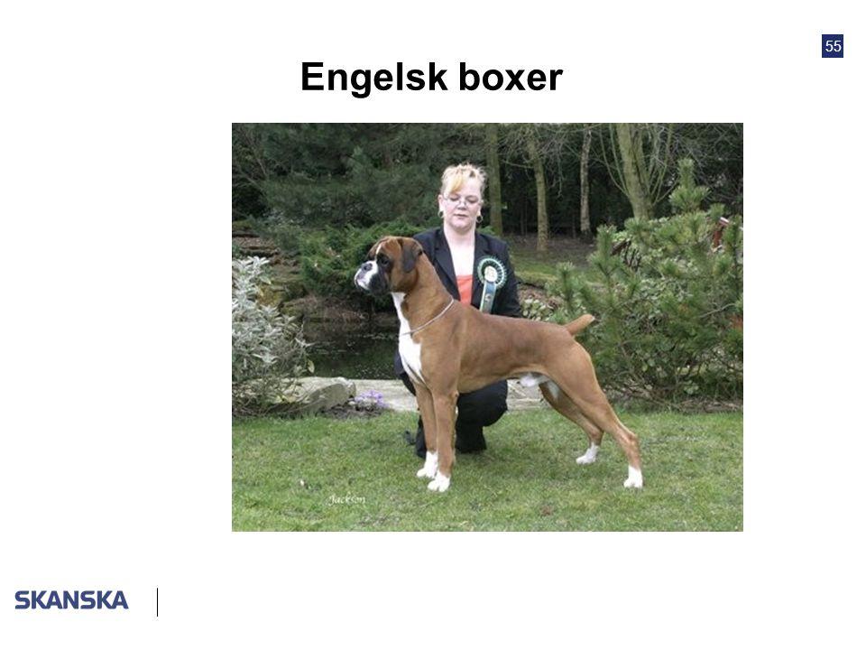Engelsk boxer