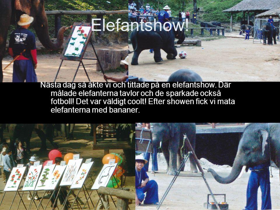 Elefantshow!