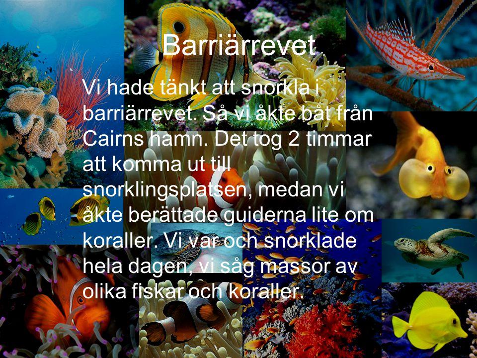 Barriärrevet
