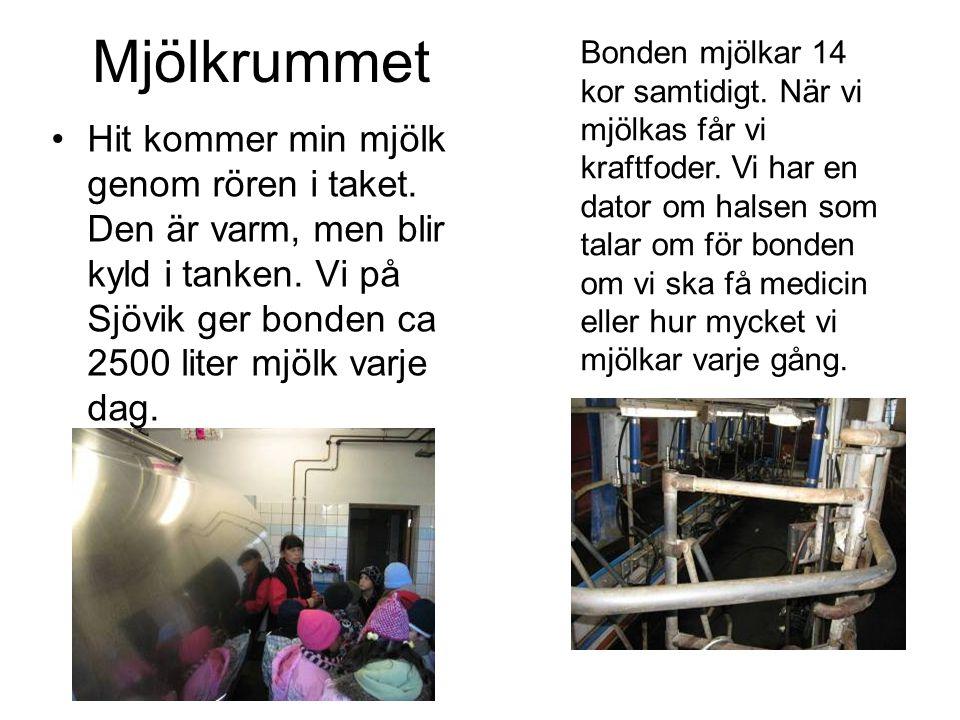 Mjölkrummet