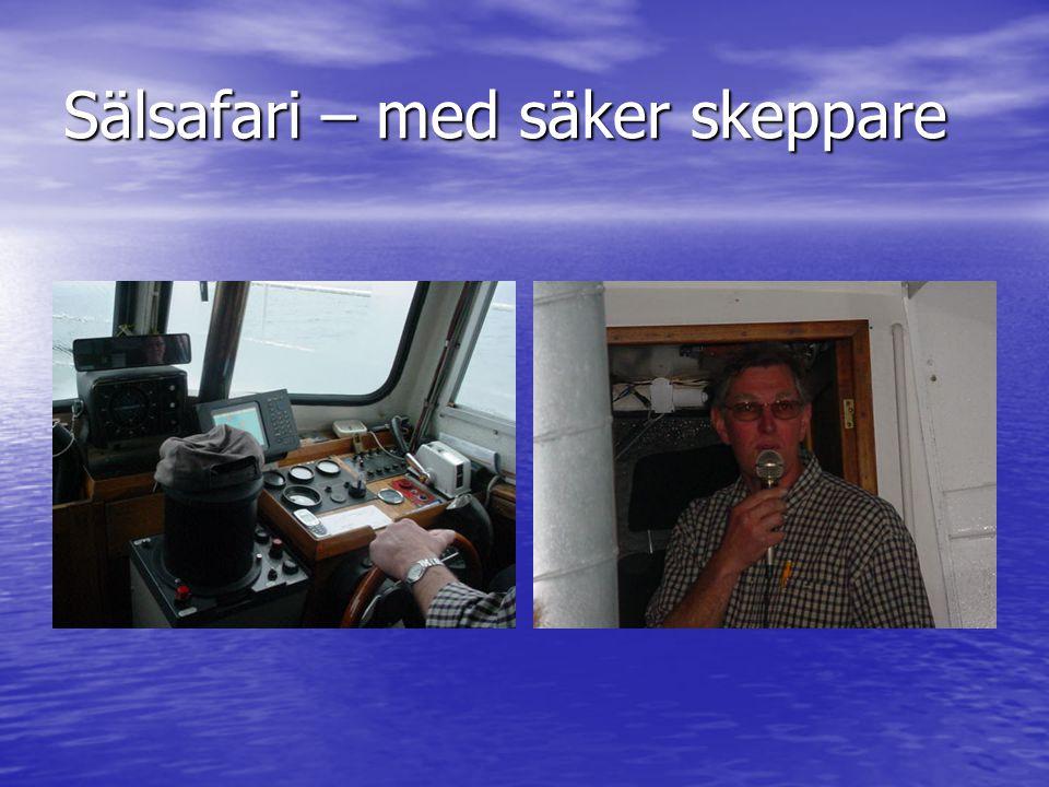 Sälsafari – med säker skeppare