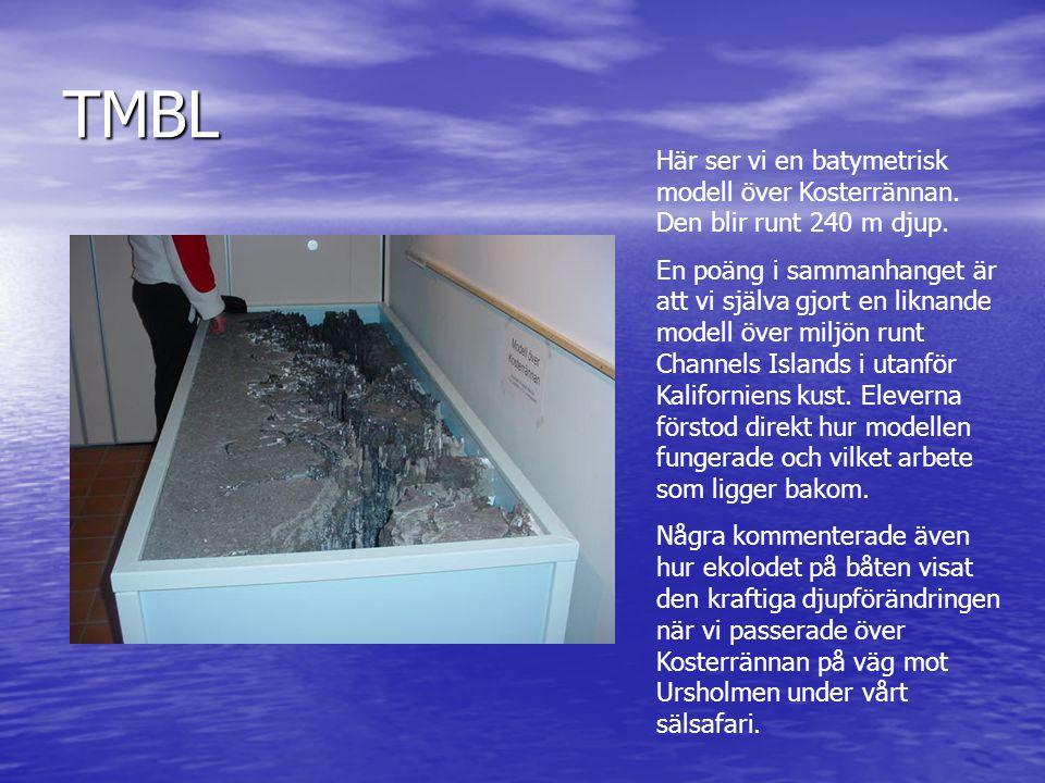 TMBL Här ser vi en batymetrisk modell över Kosterrännan. Den blir runt 240 m djup.