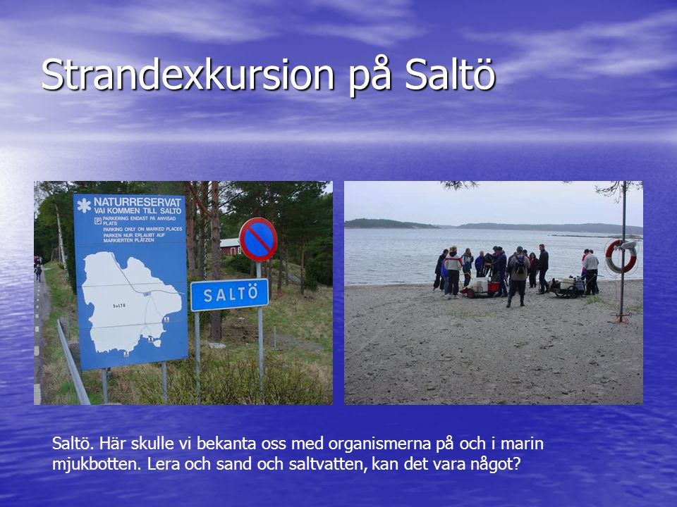 Strandexkursion på Saltö