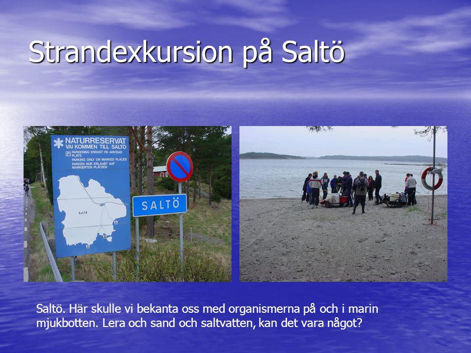 Strandexkursion på Saltö