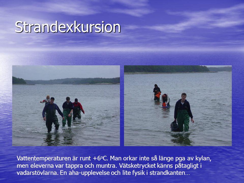 Strandexkursion