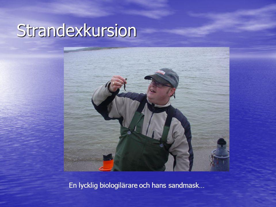 Strandexkursion En lycklig biologilärare och hans sandmask…