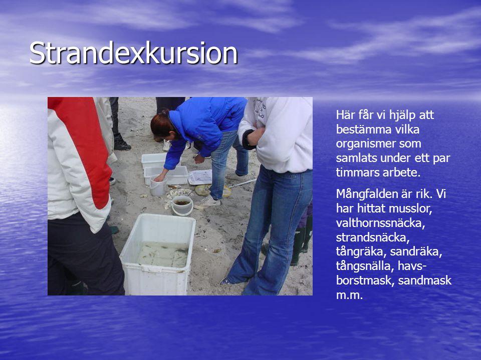 Strandexkursion Här får vi hjälp att bestämma vilka organismer som samlats under ett par timmars arbete.
