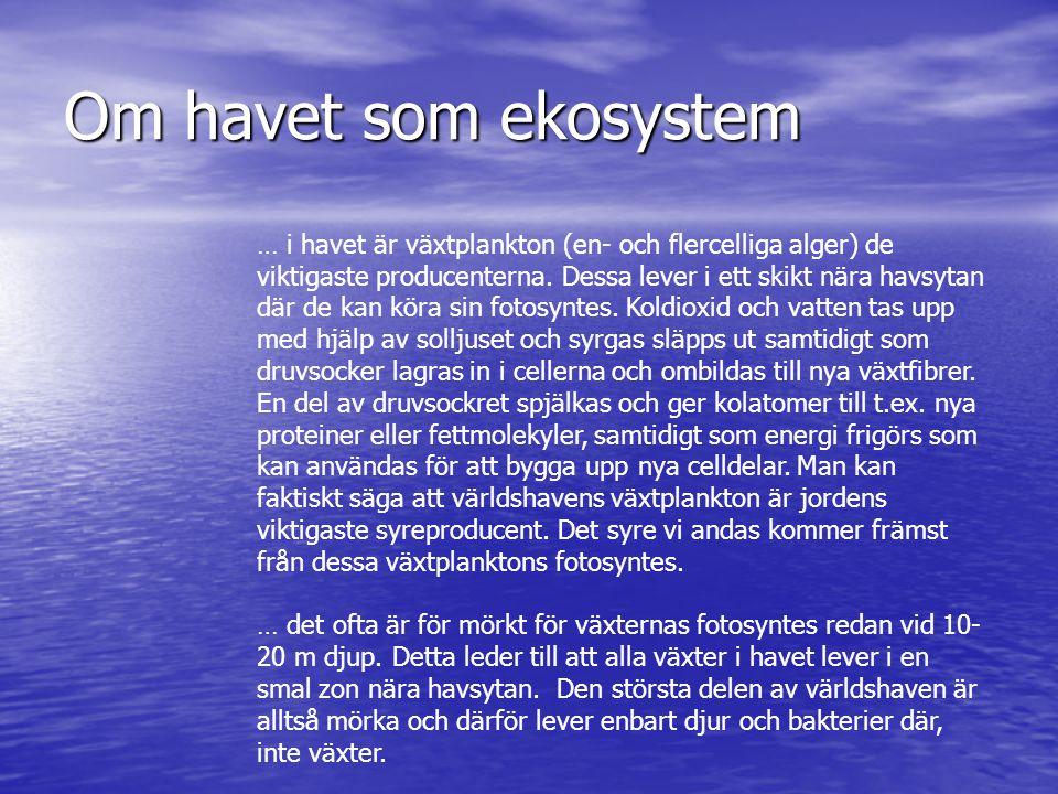 Om havet som ekosystem