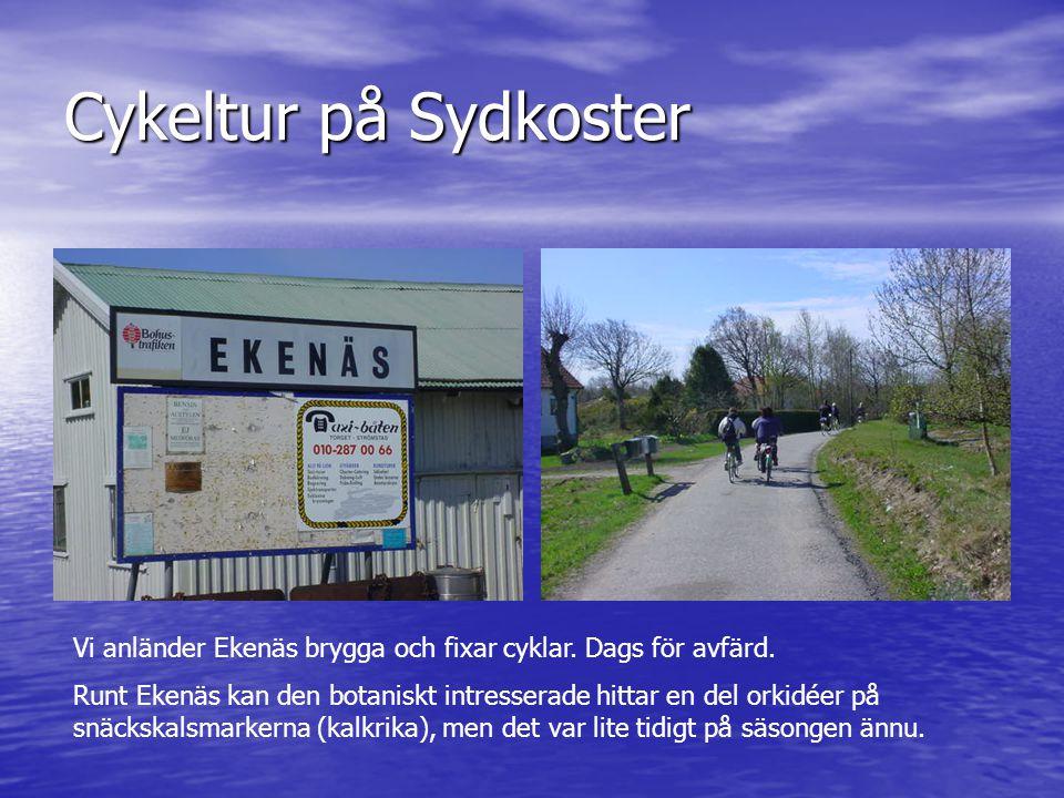 Cykeltur på Sydkoster Vi anländer Ekenäs brygga och fixar cyklar. Dags för avfärd.