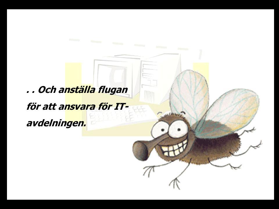 . . Och anställa flugan för att ansvara för IT-avdelningen.
