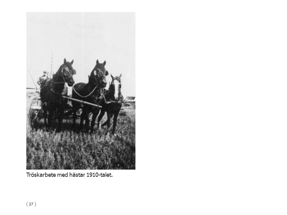 Tröskarbete med hästar 1910-talet.