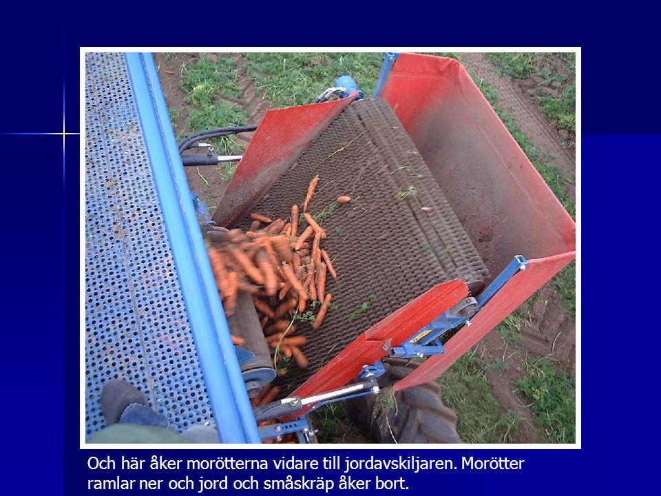 Och här åker morötterna vidare till jordavskiljaren
