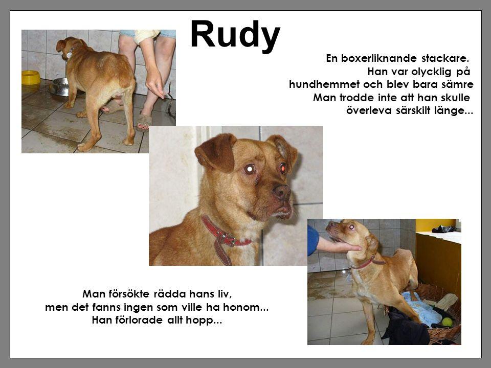 Rudy En boxerliknande stackare. Han var olycklig på