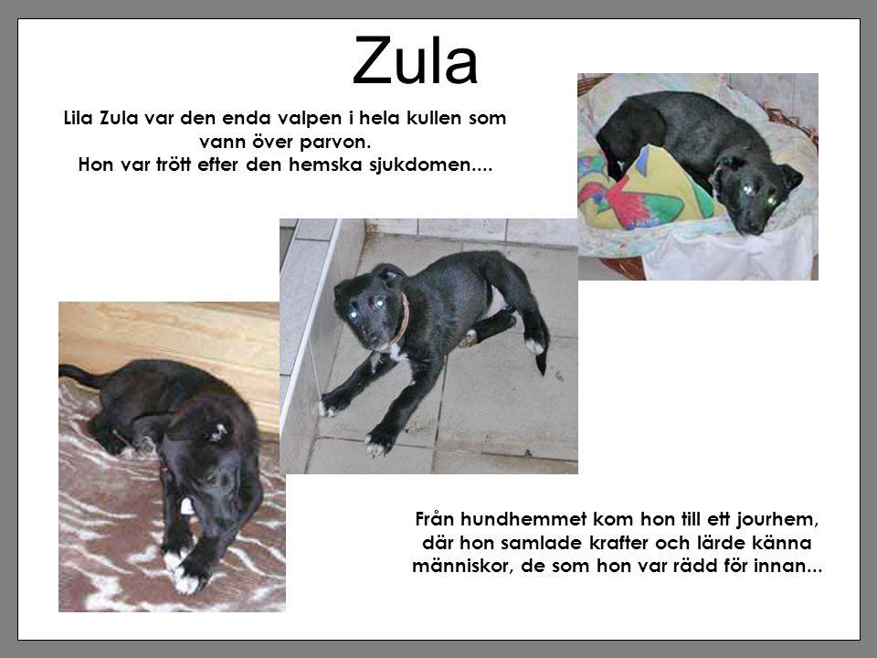 Zula Lila Zula var den enda valpen i hela kullen som vann över parvon.