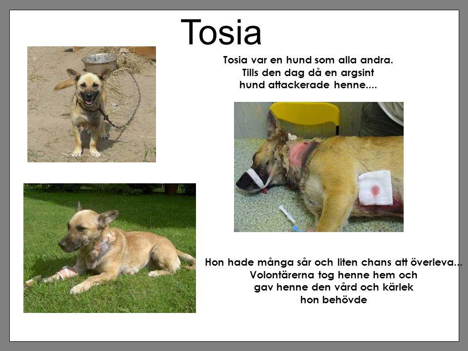 Tosia Tosia var en hund som alla andra. Tills den dag då en argsint